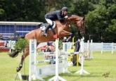 Hunter & Jumping horses