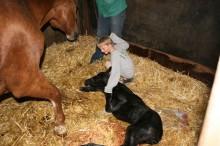 Fohlen geboren